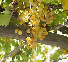 Grapes by Daidalos