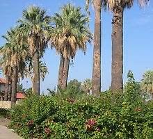 Palm Trees by the Swimming Pool, Woodlawn Lake & Park, San Antonio, Texas (City) by StellaMorales