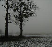 Two trees wiith mistletoe by Ireentje