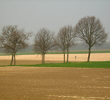 Seven small trees by Ireentje