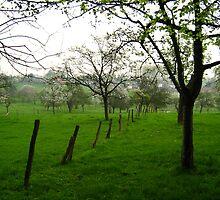 Orchard with fence by Ireentje