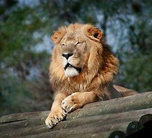 King of the Enclosure by Vanessa  MacLeod
