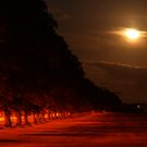 Moonlight by Abi Skeates