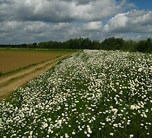 sea of white flowers by Ireentje