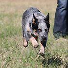 Levitating Dog  by bero84