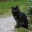 Zachary The Black  Cat by Karen Kaleta