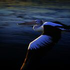 Flight of the Pelican by craigmason