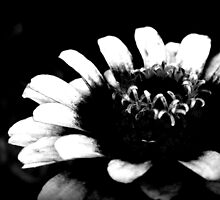 Colorless Beauty by deadbetty