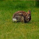 Bunny by Annie Lemay  Photography