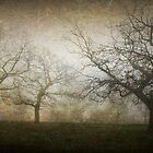 Ghostly Trees, Textured by Barb Leopold