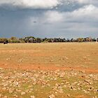 landscape with beef and pending rain by Andy Bulka