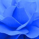 A blue rose  by JUSTART