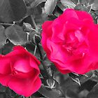Red Roses by Marie Brown ©