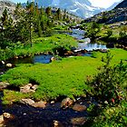 Alpine Meadow Stream by Talo Pinto