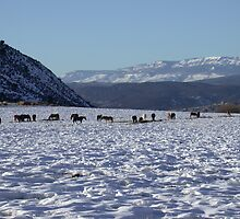 Horses grazing the Eagle Valley by Turbinephoto