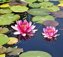 Capistrano Lillies by keng612
