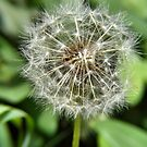 Make A Wish! by NancyC