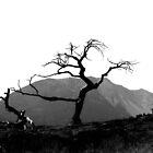 burmis tree by wnichol