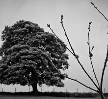 tree branch holme valley by Jean Bashford