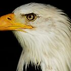 Eagle by James Rutherford