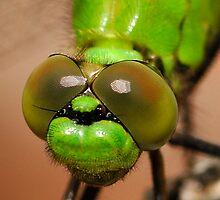 Mean Green -  Erythemis Vesiculosa  (Great Pondhawk dragonfly) by Dennis Jones - CameraView