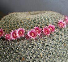 A flowery crown by annalisa bianchetti
