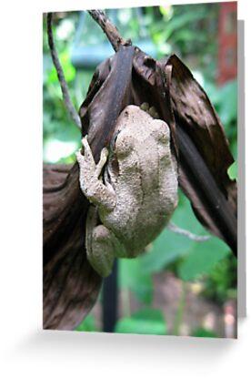 Frogger by BLAMB