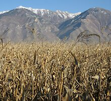Provo Utah plains by Turbinephoto