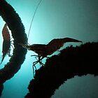 Shrimp by BLAMB