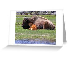 Bison and Calf Napping, Yellowstone Greeting Card