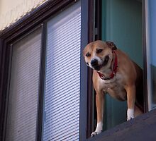 Dog in Window 2 by Tama Blough