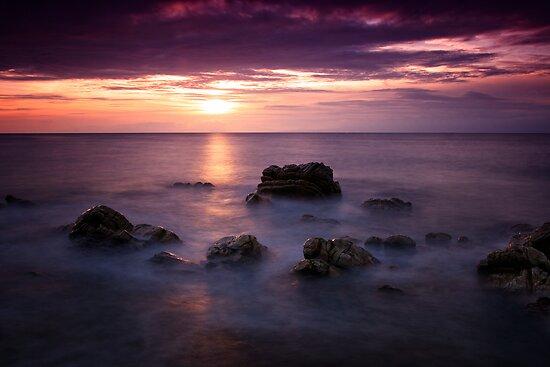 Purple Delight by Martina Cross