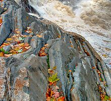 Maple Leaves at Livermore Falls by Wayne King