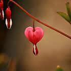 Heart of Nature by terrebo