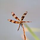 Halloween Pennant 22 by Brenda Loveless