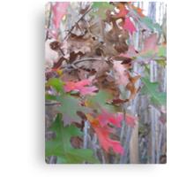 Strange Leaves - Night Fall, Celery Farm Marsh Canvas Print