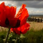 And We Remember Them by nikki harrison
