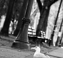 Birds @ Park Blocks, Portland, Oregon by Mike Truong