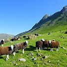 The Lake District: Herdwick Sheep &amp; The Langdales. by Rob Parsons