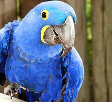 Happy Macaw by Jennifer Murray