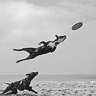 FLYING   DOG by yoshiaki nagashima