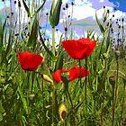 road poppies by Jimmy Joe