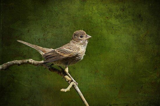 Fledgling Finch Awaiting Breakfast by Bonnie T.  Barry