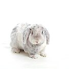 White and grey rabbit by Cristina Rossi