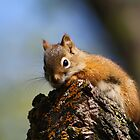 Baby Squirrel by Teresa Zieba