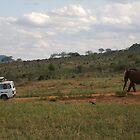 Elephant chasing Van by Abigail Rose