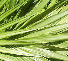 Palm Leaves by Abigail Rose
