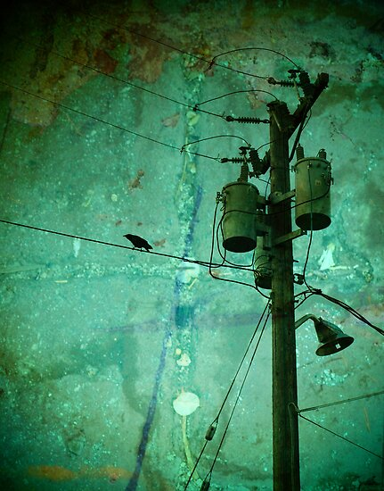 Urban Crow by Tara  Turner