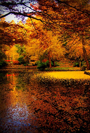 Leaves fill the lake in autumn at Alfred Nicholas Gardens by Elana Bailey