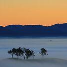Fog of my dawn by Donovan wilson